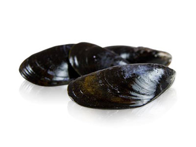 mussels-live
